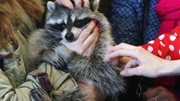 Запрет контактных зоопарков