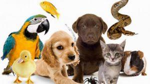 Изображение - Налог на животных в российской федерации 2019 881047-300x169