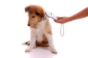 Изображение - Налог на животных в российской федерации 2019 chip_110418-300x200
