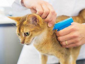 Изображение - Налог на животных в российской федерации 2019 imgonline-com-ua-resize-oipyquhagy5v-300x225