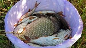 Новый закон о рыбалке в 2020 году в ленинградской области