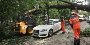 Упало дерево на ашину кем судитьсся